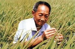 为什么说袁隆平是世界公认的科学巨人和发明大家?