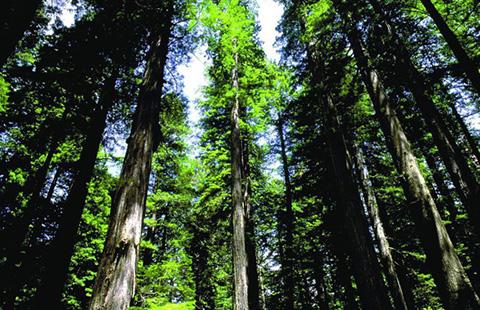 【晨报】全国林业知识产权试点单位已达75家;深圳95%发明专利申请量来自企业
