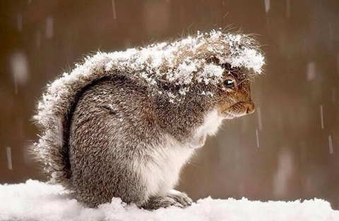单身狗怎么过冬?有了这个取暖神器还要什么男朋友!