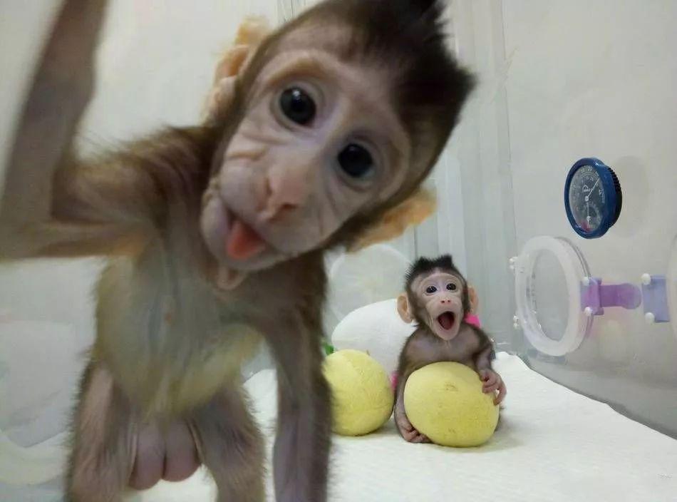 克隆猴诞生,尖端生物技术可以通过申请专利来保护吗?