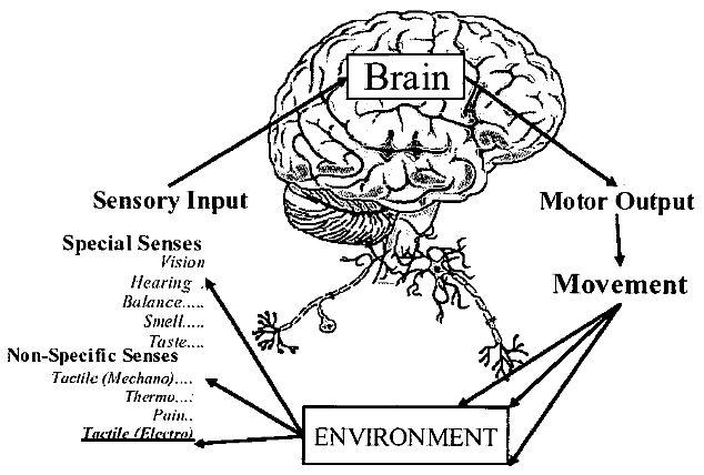 """黑科技帮助盲人重新""""看见""""世界---Brainport专利分析"""