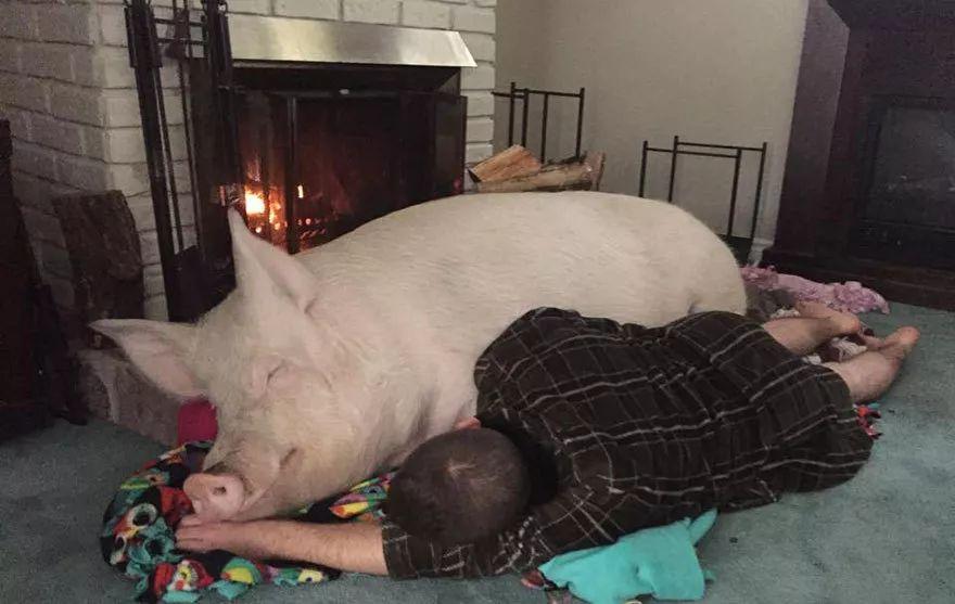 带着猪猪和猪猪小秘密,给您拜年来啦!