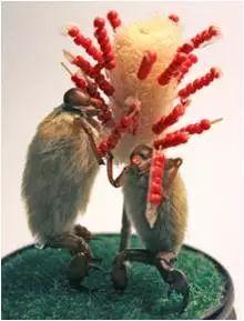 """""""毛猴""""能通过专利保护吗?"""
