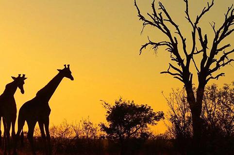 在南非如何保护知识产权?