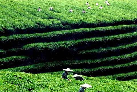 #晨报#中国已成为全球最大农业专利产出贡献国;绿森林硅藻泥打假系列十一:People green forest 商标被裁无效