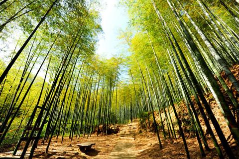 【晨报】首个竹纤维产业知识产权联盟在浙成立;科威特发布新版权法